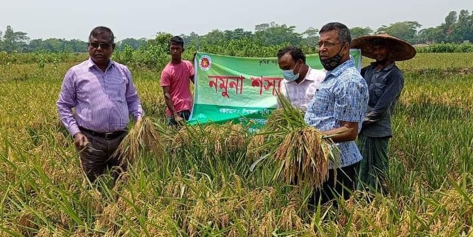 Farmers expecting 30,000 tonnes more Boro harvest than target in Sylhet division